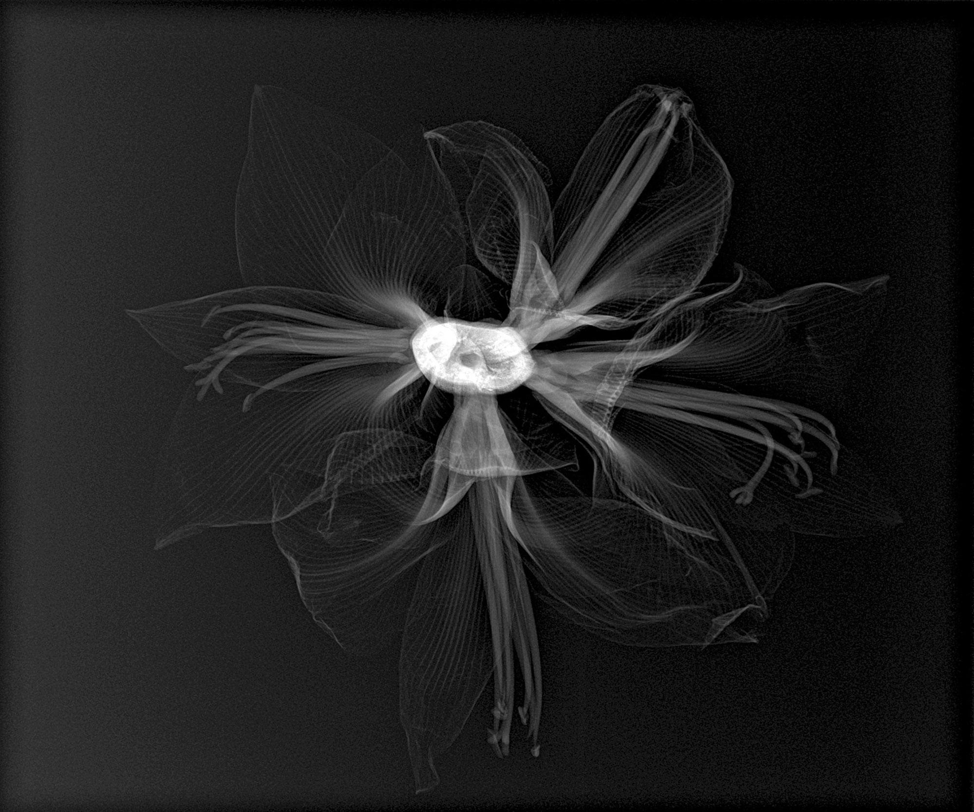 Blumen52